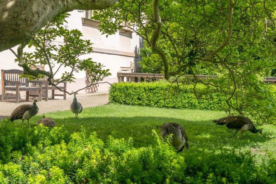 jardin de Prague